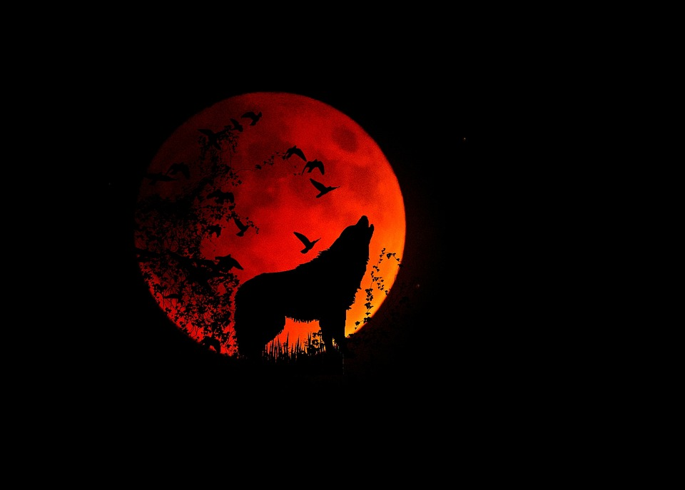 full-moon-1776051_960_720